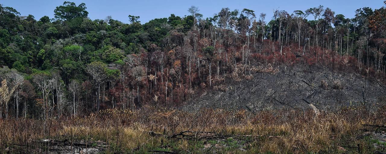 Extreme Abholzung