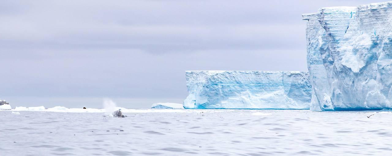Größter Eisberg bricht