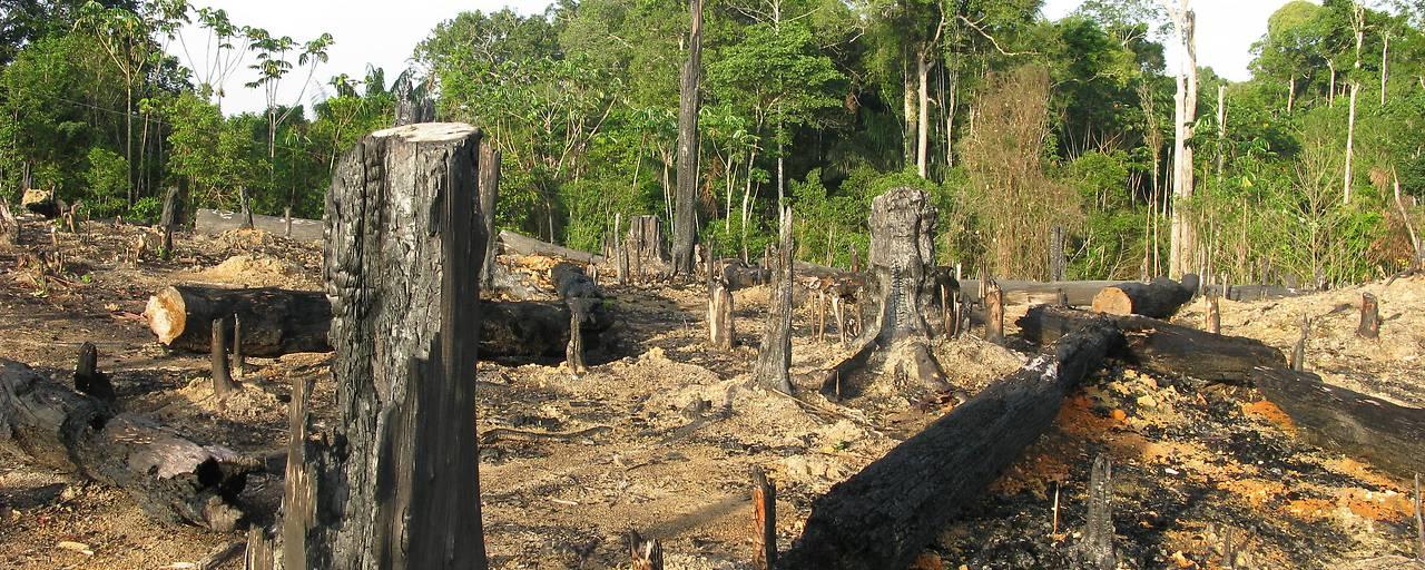 Goldabbau fördert Zerstörung