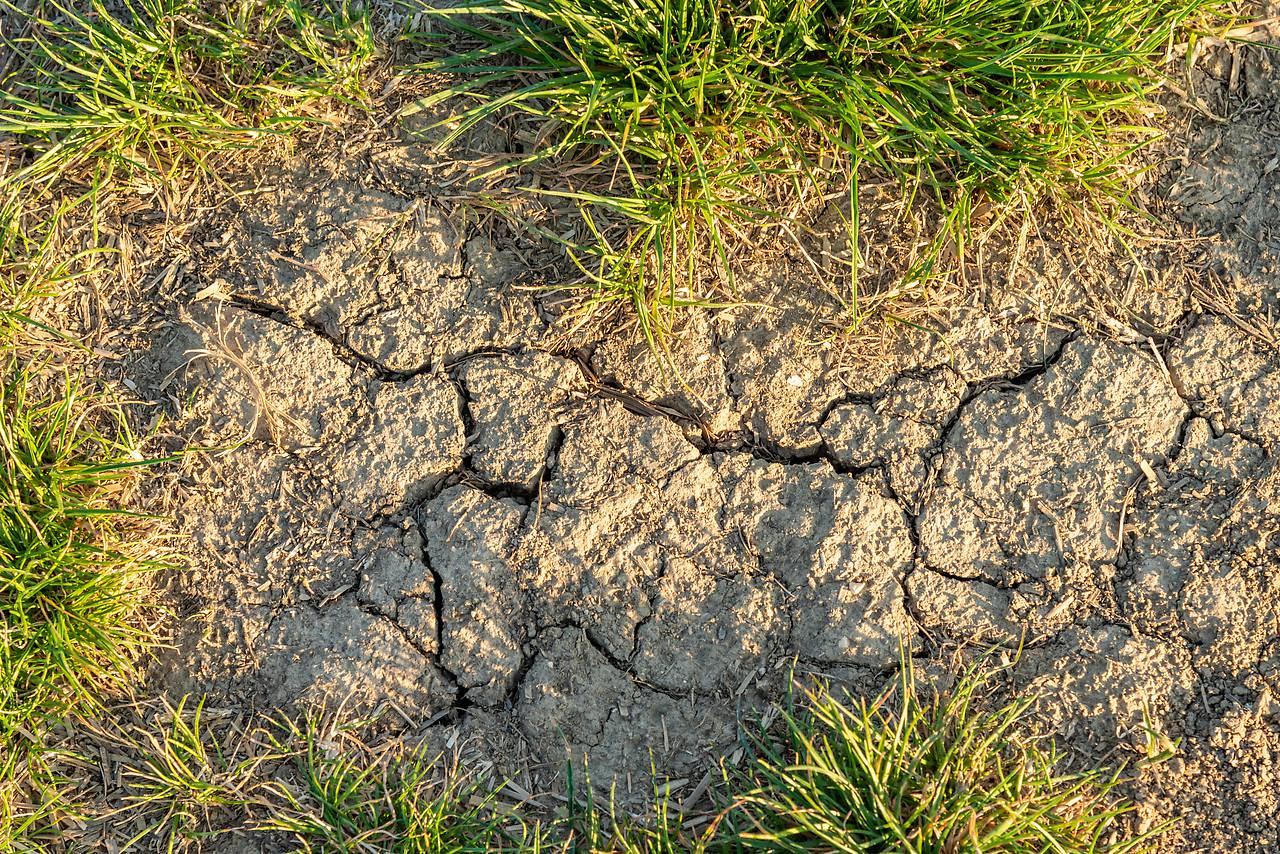 Heimische Dürre