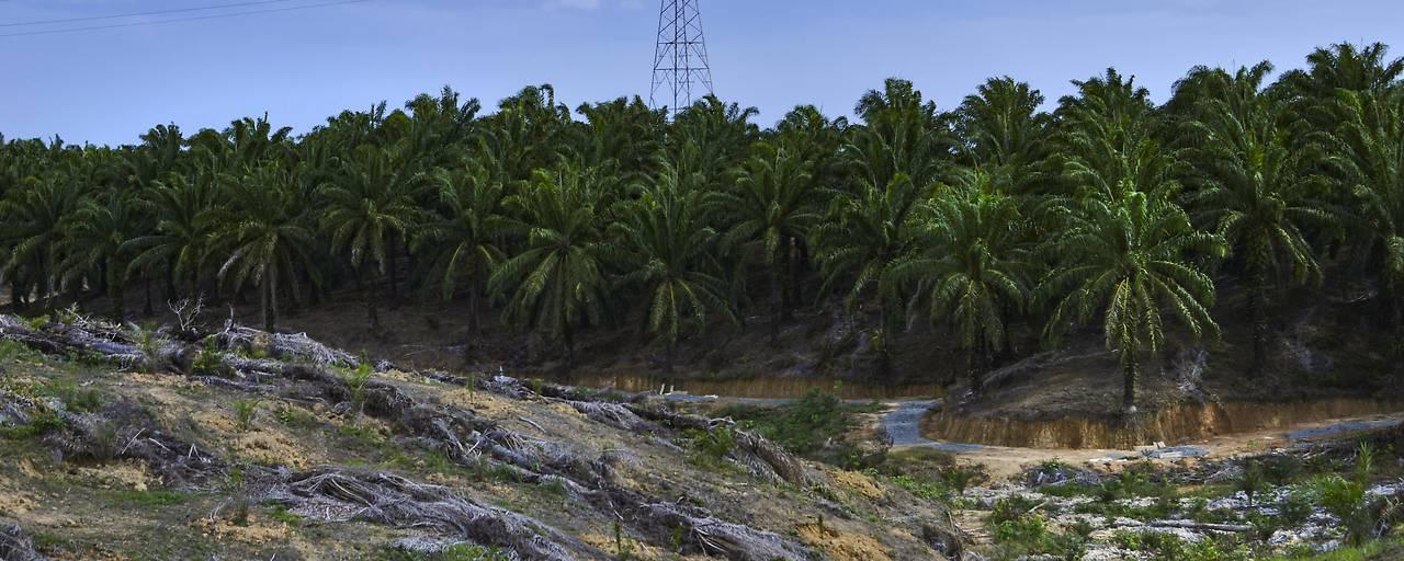 Konsum zerstört Wälder