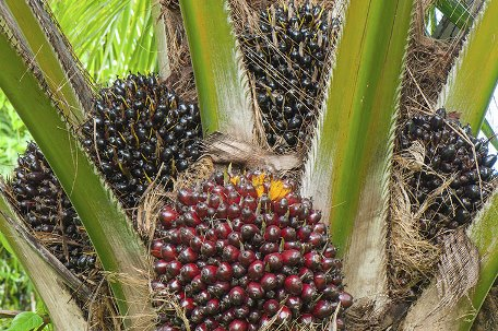 Palmölzertifikate