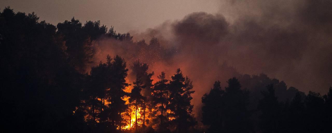 Mehr Waldbrände